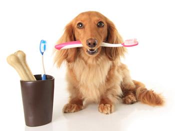 Állati fogkő: veszélyesebb, mint hinnéd!
