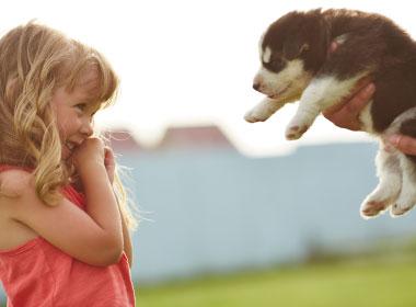 Új családtag érkezik – kiskutyám lesz!  I. rész